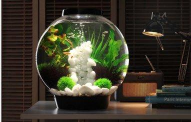 Túžite po akváriu? Pozrite sa, ako mať to najkrajšie!